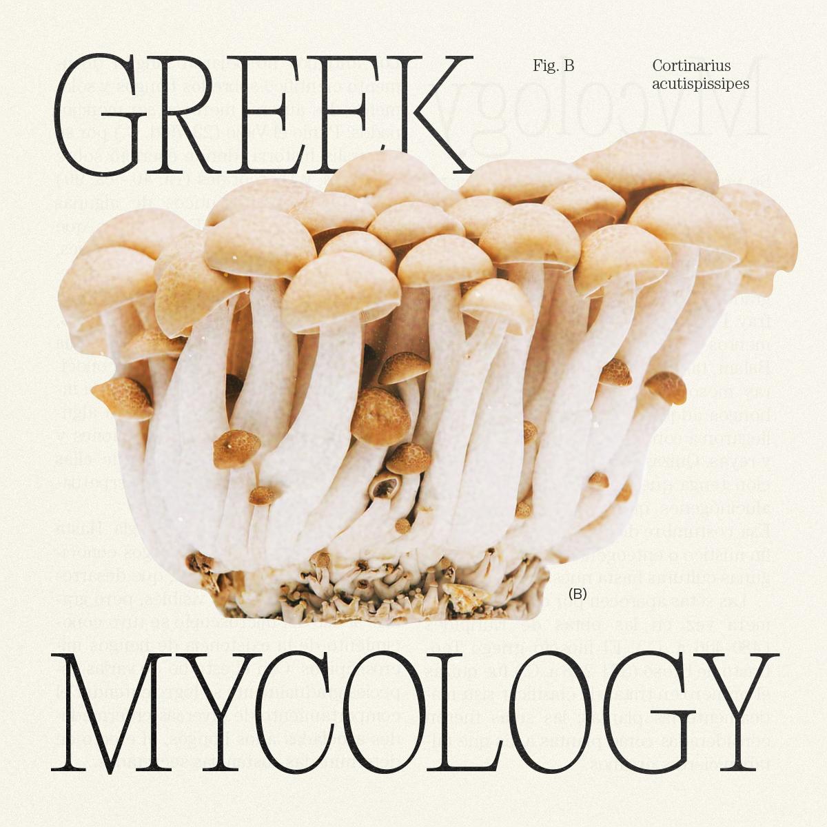GreekMycology_Idea_MateoBuitrago-03